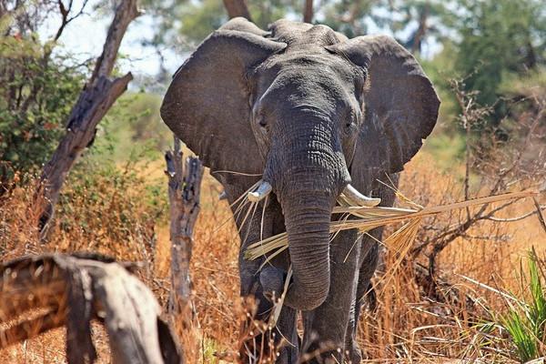 easy sud africa sett