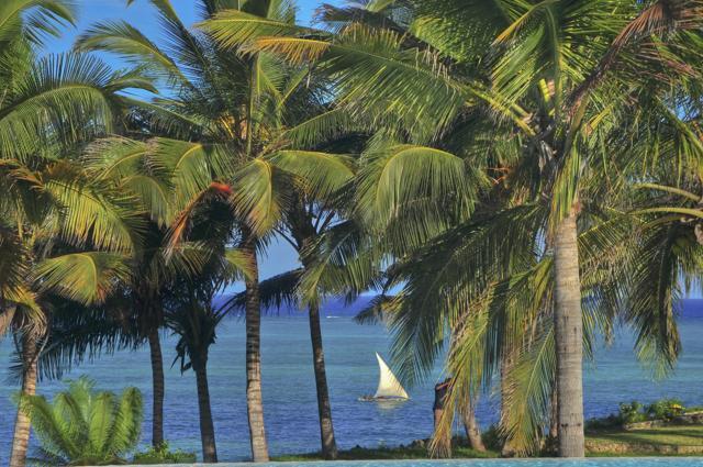 paisaje palmeras