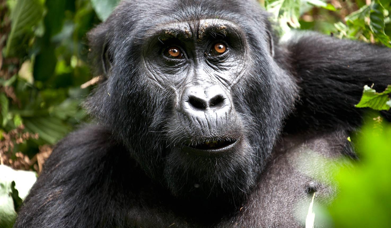 uganda-600