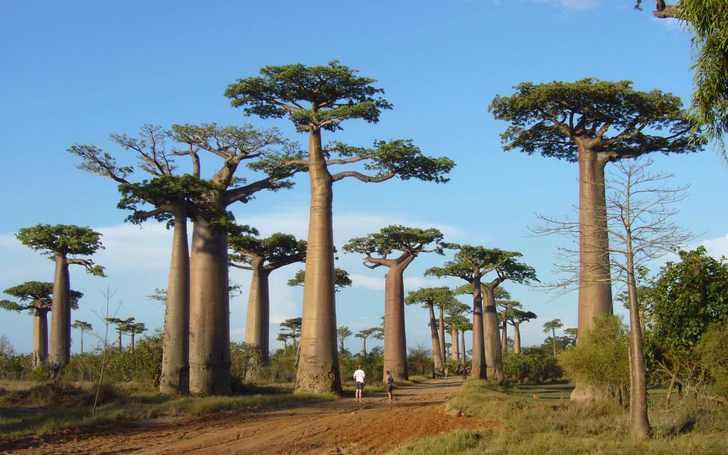 Viaggio Madagascar