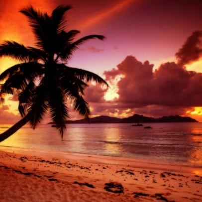 seychelles alba