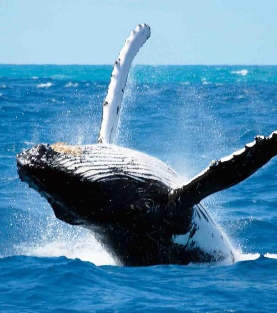 nuova zelanda whale breach
