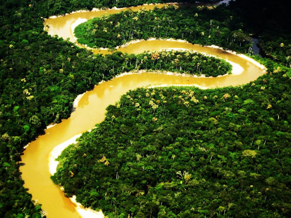 Viaggio Brasile Foresta