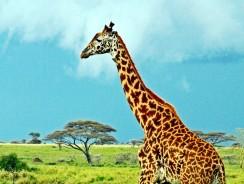 Scopri tutti i Tour e Safari in Tanzania in Esclusiva 2017
