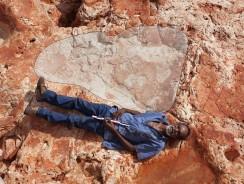 Australia. Scoperte le Orme di Dinosauro più Grandi del Mondo, un vero Jurassic Park