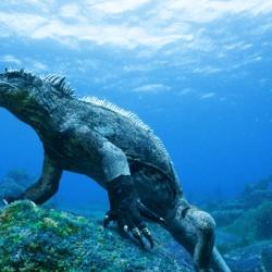 I Tesori dell'Ecuador (Opz. Isole Galapagos)
