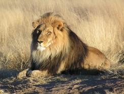 [VIDEO] I BIG FIVE d'AFRICA: un'esperienza avventurosa