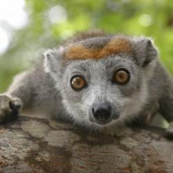 Viaggio Invito al MADAGASCAR e MAURITIUS