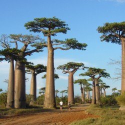 Viaggio MADAGASCAR EASY