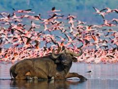 Luoghi da visitare in Kenya: Lake Nakuru National Park