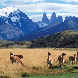 Fin del Mundo: Argentina, Crociera Capo Horn e Cile