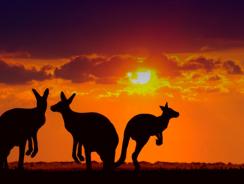 Viaggio Avventura nel Deserto Australiano dagli spazi infiniti