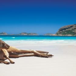 Viaggio in Australia con Kangaroo Island