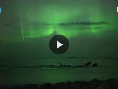 Norvegia, megattere sotto l'aurora boreale: lo spettacolo è unico