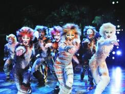 """Eventi dal Mondo. Il Musical """"Cats"""", i Gatti di Jellicle – Prossime date a Broadway"""