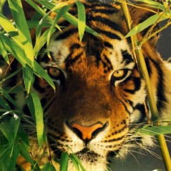 Viaggio in INDIA. Arte e Natura – Parchi del Nord