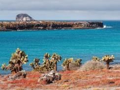 Isla Plaza Sur. Dove le Galapagos ti accolgono col tappeto rosso
