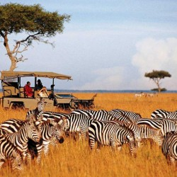 Viaggio in Kenya Overland 2016 – Safari e Masai Mara