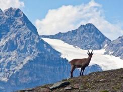 Stelvio, il Parco Nazionale che ci fa Sognare ad Occhi Aperti