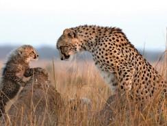 Safari in Africa? Ecco dove e quando andare per goderli al meglio