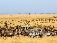 NATALE 2015 e CAPODANNO 2016 in SUDAFRICA: ecco 9 proposte di viaggio per te!