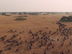 VIDEO. This is UGANDA! Un (davvero) meraviglioso volo sull'Africa degli animali!